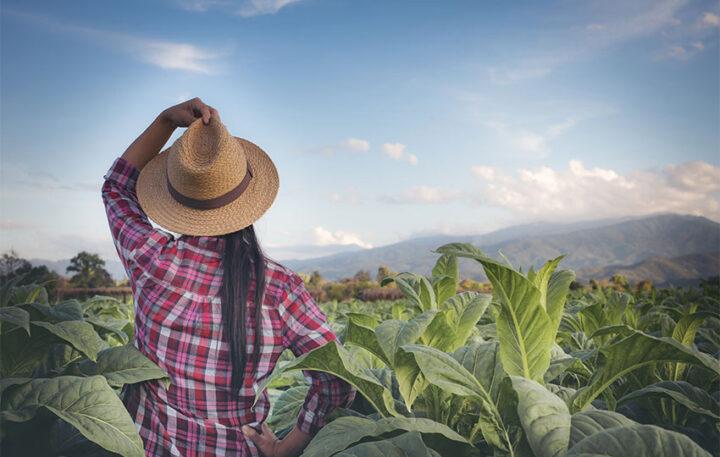 Σειρά μαθημάτων Νεανικής Επιχειρηματικότητας για αγροτικές περιοχές